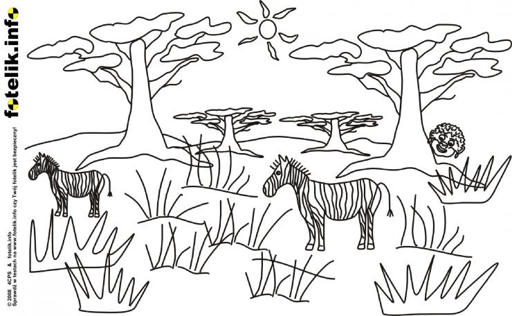 Mały Simba obserwuje zebry